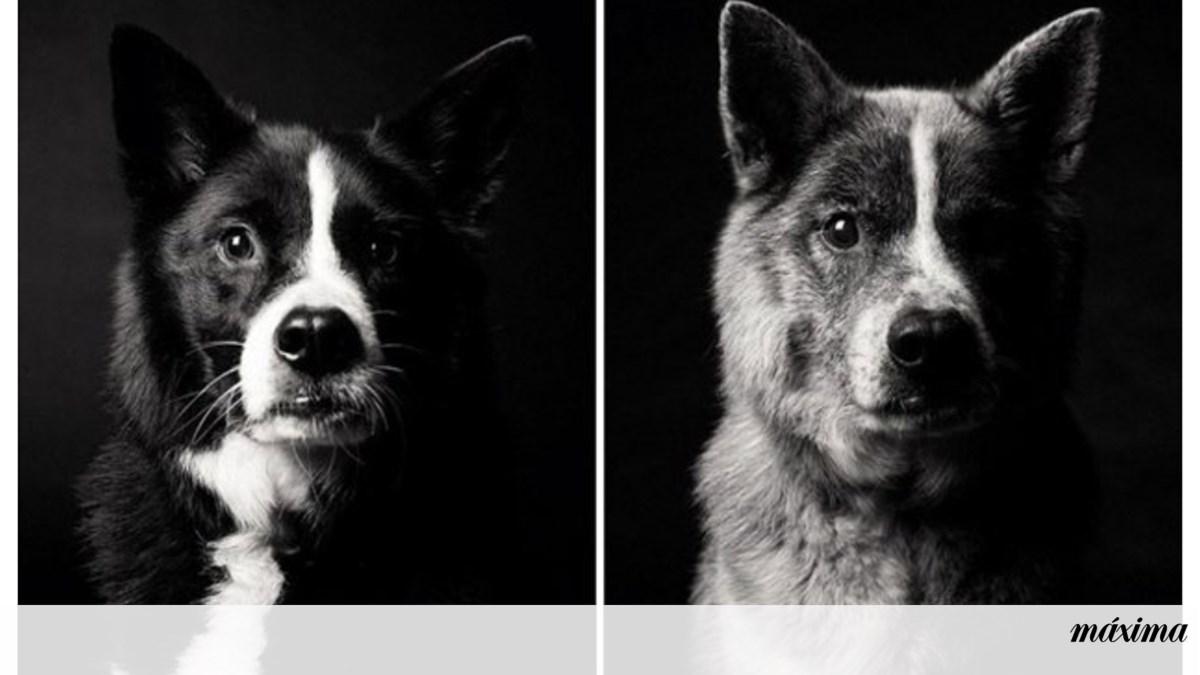 O envelhecimento dos cães em imagens
